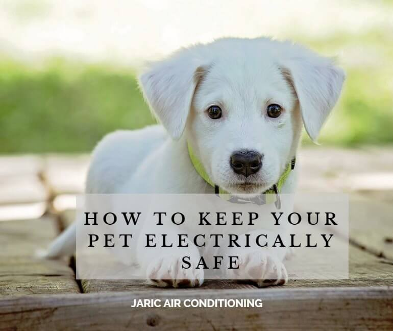 How to keep your pet electrically safe